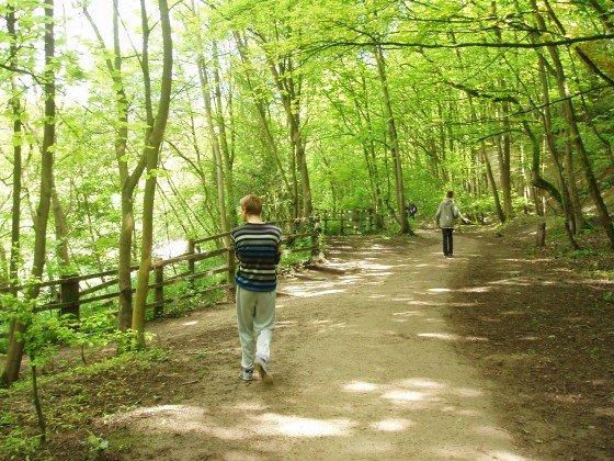 Humber woodland walk